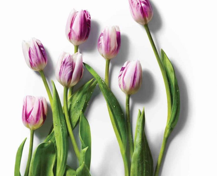 Amazon-Whole-Foods-Tulips