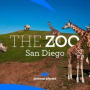 The Zoo San Diego Animal Planet
