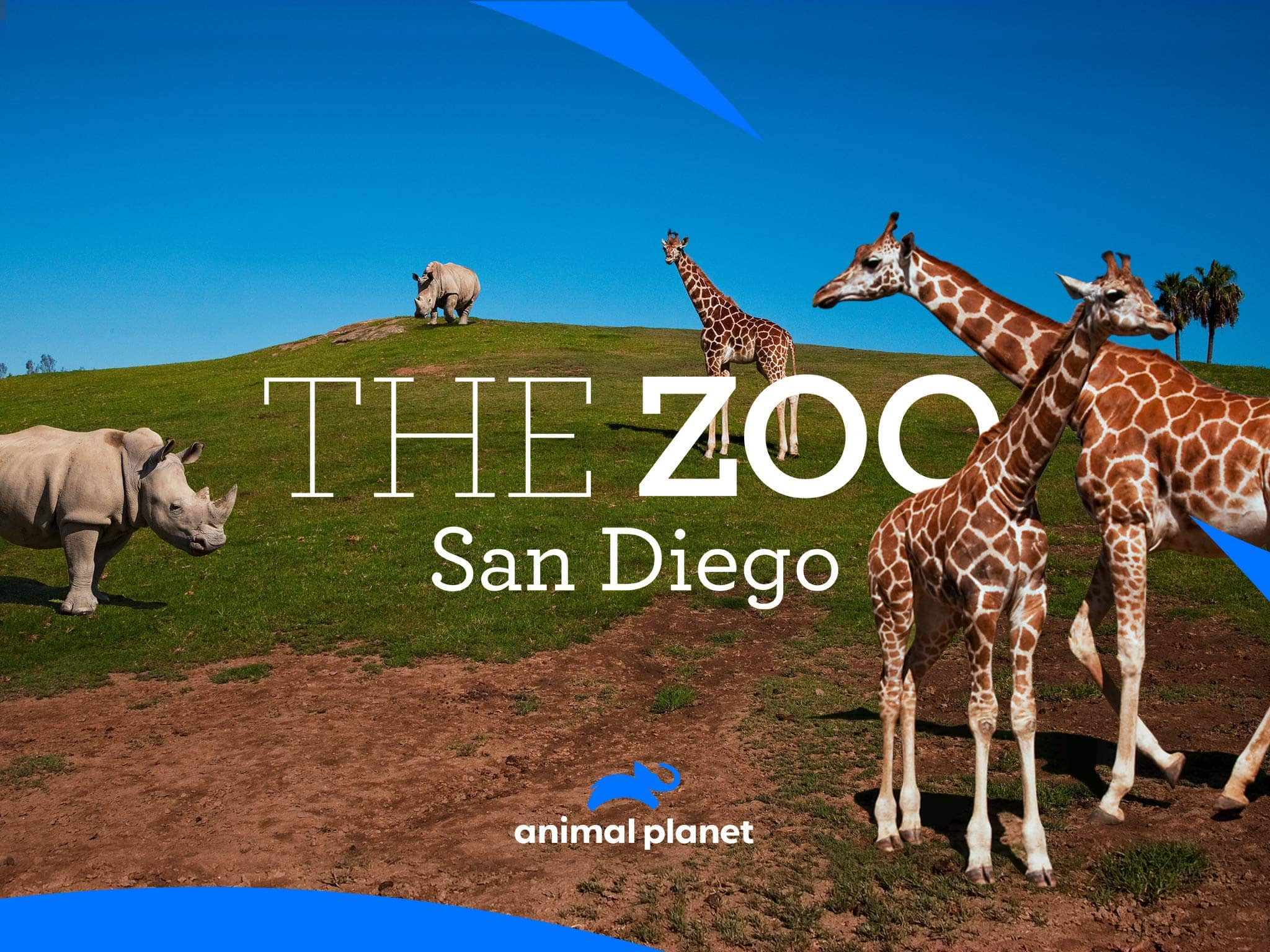 The Zoo San Diego Animal Planet
