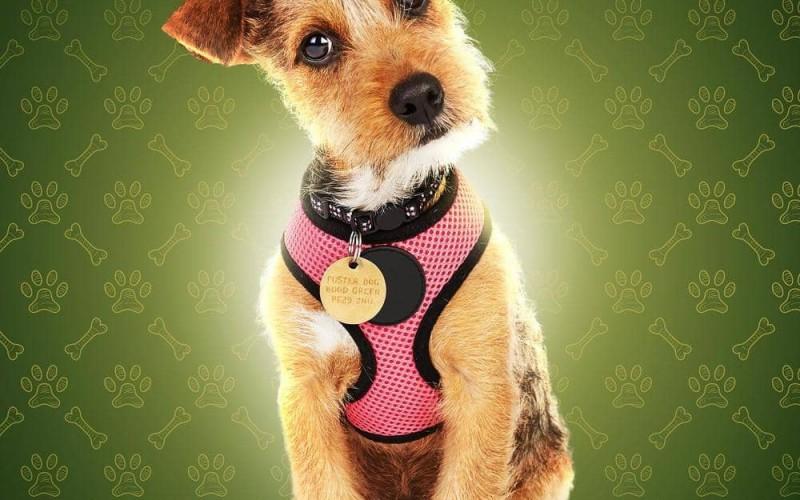 The Dog HouseUK Poster Key Art