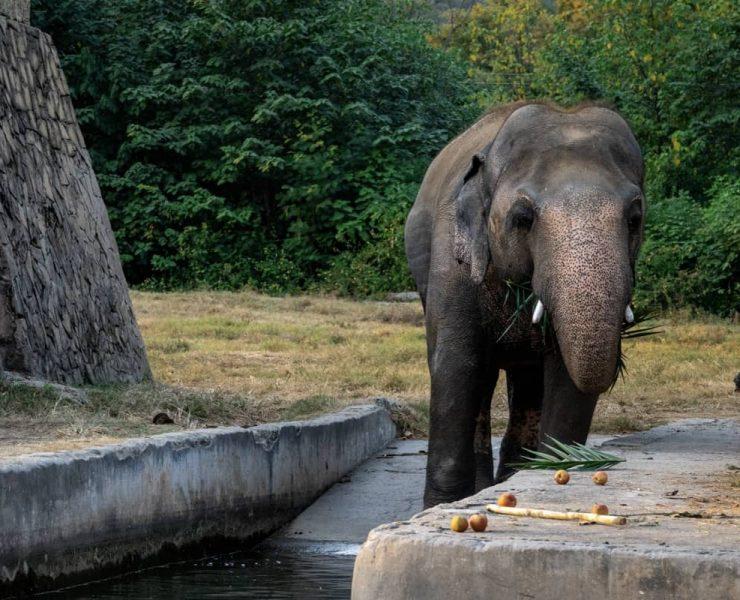 Kaavan Cher Elephant
